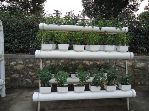 家庭废物利用小制作花盆