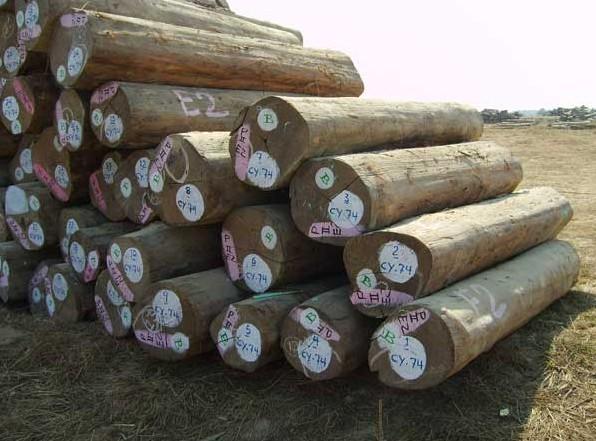 木材交趾黄檀一般贸易进口报关木材进口报关公司