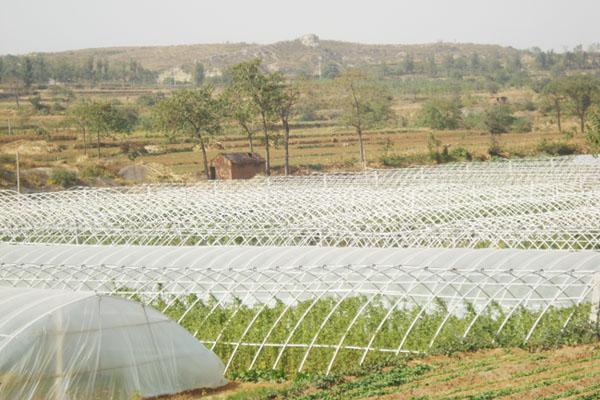 北方水泥日光温室蔬菜大棚造价 效果图,产品
