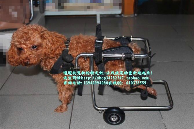中国·辽宁省·葫芦岛市·龙港区老基地北路遛遛狗宠物爱心机构(邮编