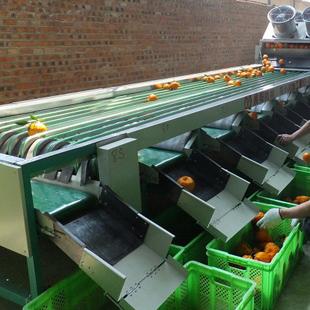 水果清洗分级机高清图片 高清大图