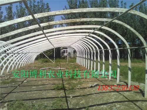 公司目前承建的日光温室和大棚已逾5000多亩
