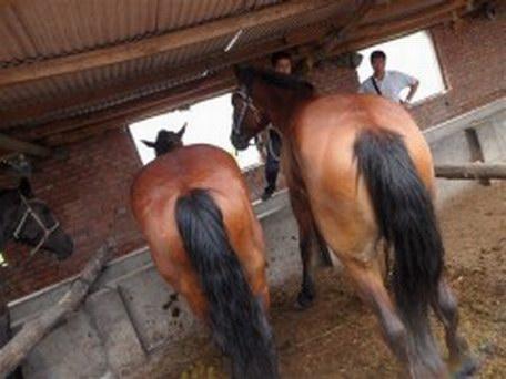 养马-养马场-养马基地-骑乘马-养马技术-怎么养马-宠物马-纯血马价格